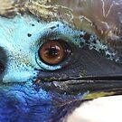 Colours of the Cassowary by Steve Bullock