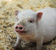 Bacon, I'm not. by Scott Edwards
