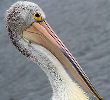 Look at my pretty beak ! by jozi1