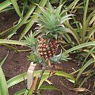 Baby Pineapple by Jen Hendricks