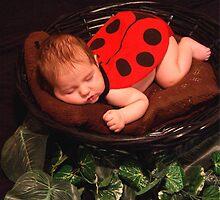 Tiny Ladybug by Dawn Palmerley