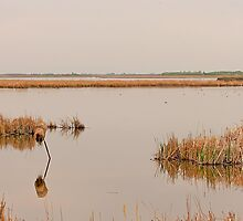 Oak Hammock Marsh by Vickie Emms