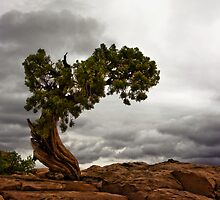 bonsai by Rachel  McKinnie