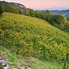Autumn dusk on Roussette vineyard by Patrick Morand