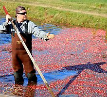 Cranberry Harvester by Dave Law