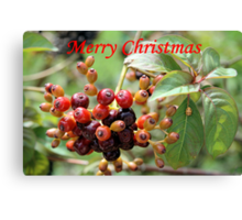 Christmas Berries I Canvas Print