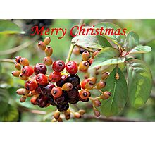 Christmas Berries I Photographic Print