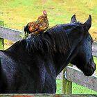 Floyd's Horseback Ride by angelandspot