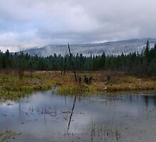 A BEAVER POND NEAR MT. ADAMS IN WASHINGTON STATE by Michael Beers
