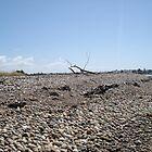 drift wood on the rocks by Vanessa k