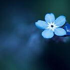 Forget-me-not by BryanLee