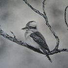 Kookaburra by Philip Holley
