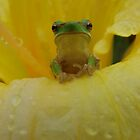 frog on daylilly by Belinda Cottee