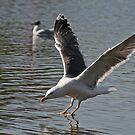 Landing by Robert Abraham