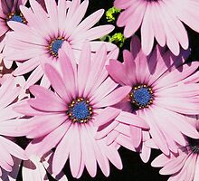 lavender bouquet by stelfox1