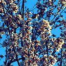 Spring by Kallian