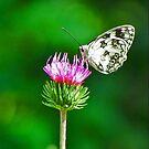 Butterfly by Kallian
