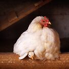 Hetty with chick by ozzzywoman