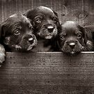 3 pups by ozzzywoman