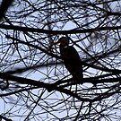 Heron by Kallian