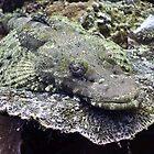 Crocodile Fish, Bali Indonesia by David Leonard