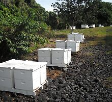 """A page from my new book """"What do honeybees do?"""" Ten frames hives in a bee yard or """"Apiary"""" by jdyphoto"""