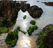 Devon Rock Pools by James Robinson