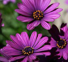 Purple flowers by jaecee666