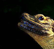Iguana type lizard....... by jdmphotography