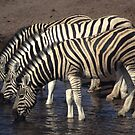 Three zebras at a watering hole, by cascoly