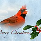 Merry Christmas Cardinal by Bonnie T.  Barry