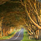 Beech Avenue - Print by Andrew Doggett