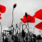 Red Poppies - Glasgow Scotland UK Europe by simpsonvisuals