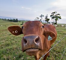 Where's the Beef? by James  Messervy