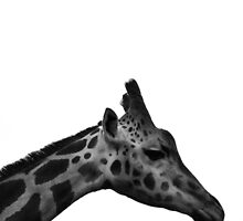 Giraffe in Black and White by Michelle McConnell