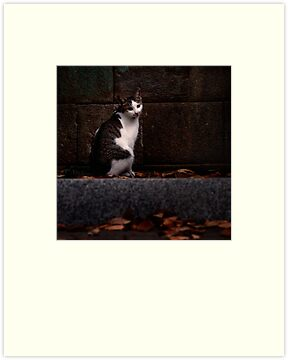 The Temple Cat; Zoshigaya, Tokyo by Alfie Goodrich