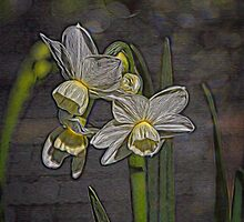 Daffodil Glow by Elaine Teague