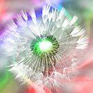Rainbow Dandi by ChereeCheree