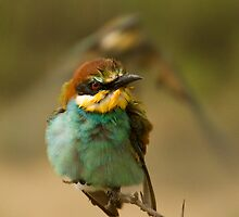 European Bee-Eater by George Stylianou