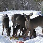 Winter Feast by Martha Medford