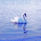 The Graceful Swan by sarnia2