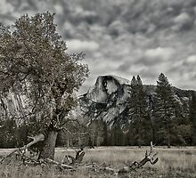 Yosemite Half Dome tonal by farmdogger