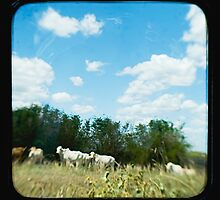 Brahman Cattle by Jules Campbell