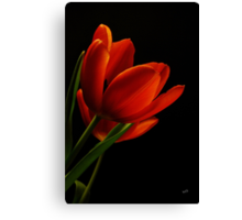 The Tulips  Canvas Print