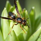 Wasp Macro by Vincent Vartorella