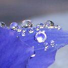 Beads by Shaina Lunde