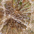 Jewels in the crown- Tragopogon porrifolius- Salsify by Coloursofnature