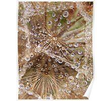 Jewels in the crown- Tragopogon porrifolius- Salsify Poster