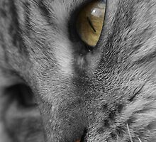 Tabby Cat with Soulful Eyes by simpsonvisuals