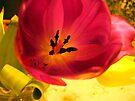 Tulip by karolina